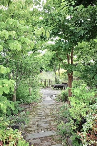 植物時間 波佐見町 西の原_b0014152_21101958.jpeg