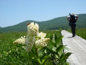 雄国沼、ニッコウキスゲが咲き始めました_a0096989_22550065.jpg