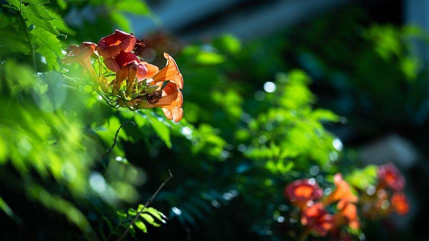 初夏の光蜥蜴と戯れる花屋さん_d0353489_11393670.jpg
