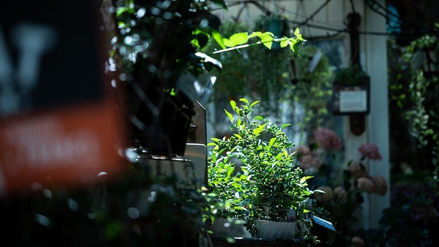 初夏の光蜥蜴と戯れる花屋さん_d0353489_11394464.jpg