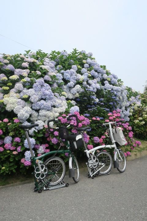 紫陽花サイクリング_c0132901_20173093.jpg
