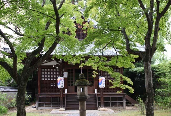 沙羅双樹の花が咲いた 真如堂_e0048413_21161238.jpg