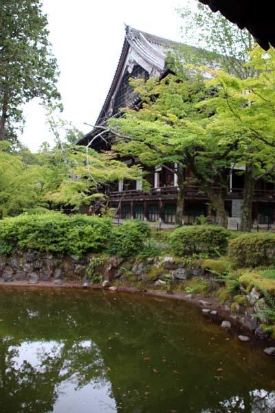 沙羅双樹の花が咲いた 真如堂_e0048413_21161720.jpg
