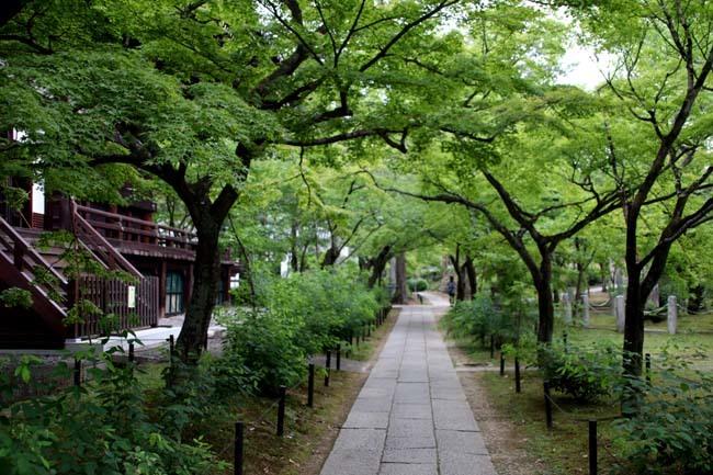 沙羅双樹の花が咲いた 真如堂_e0048413_21162124.jpg