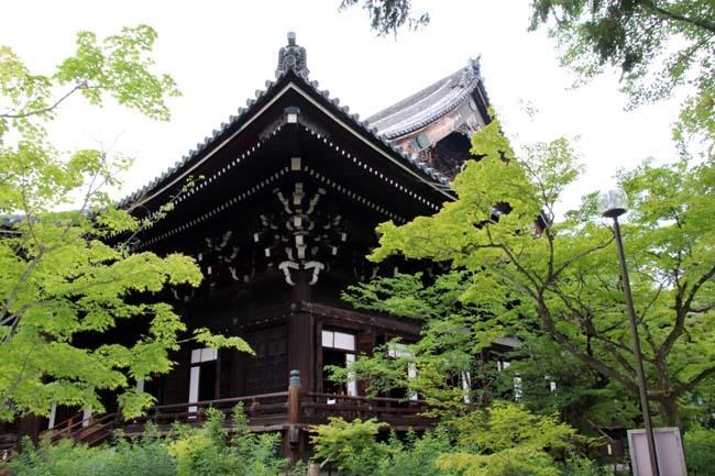 沙羅双樹の花が咲いた 真如堂_e0048413_21162529.jpg