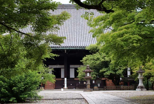 沙羅双樹の花が咲いた 真如堂_e0048413_21221304.jpg