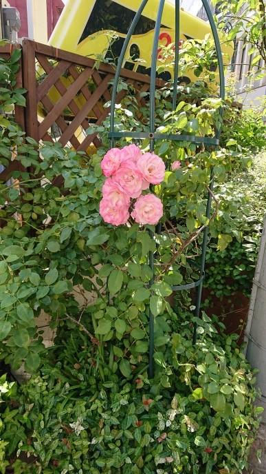 ハッチにバラの花束を_d0155439_14262581.jpg