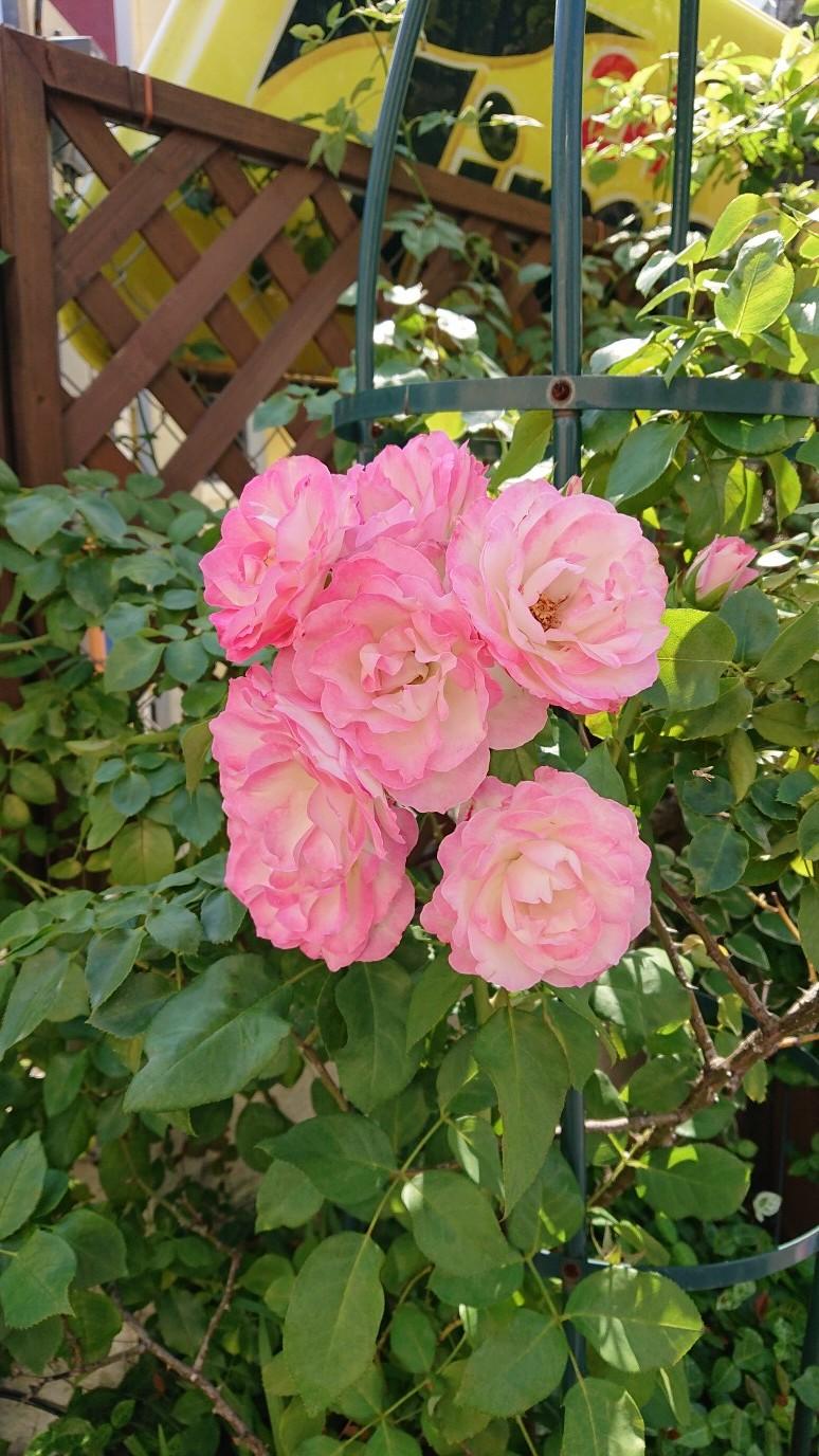 ハッチにバラの花束を_d0155439_14264705.jpg