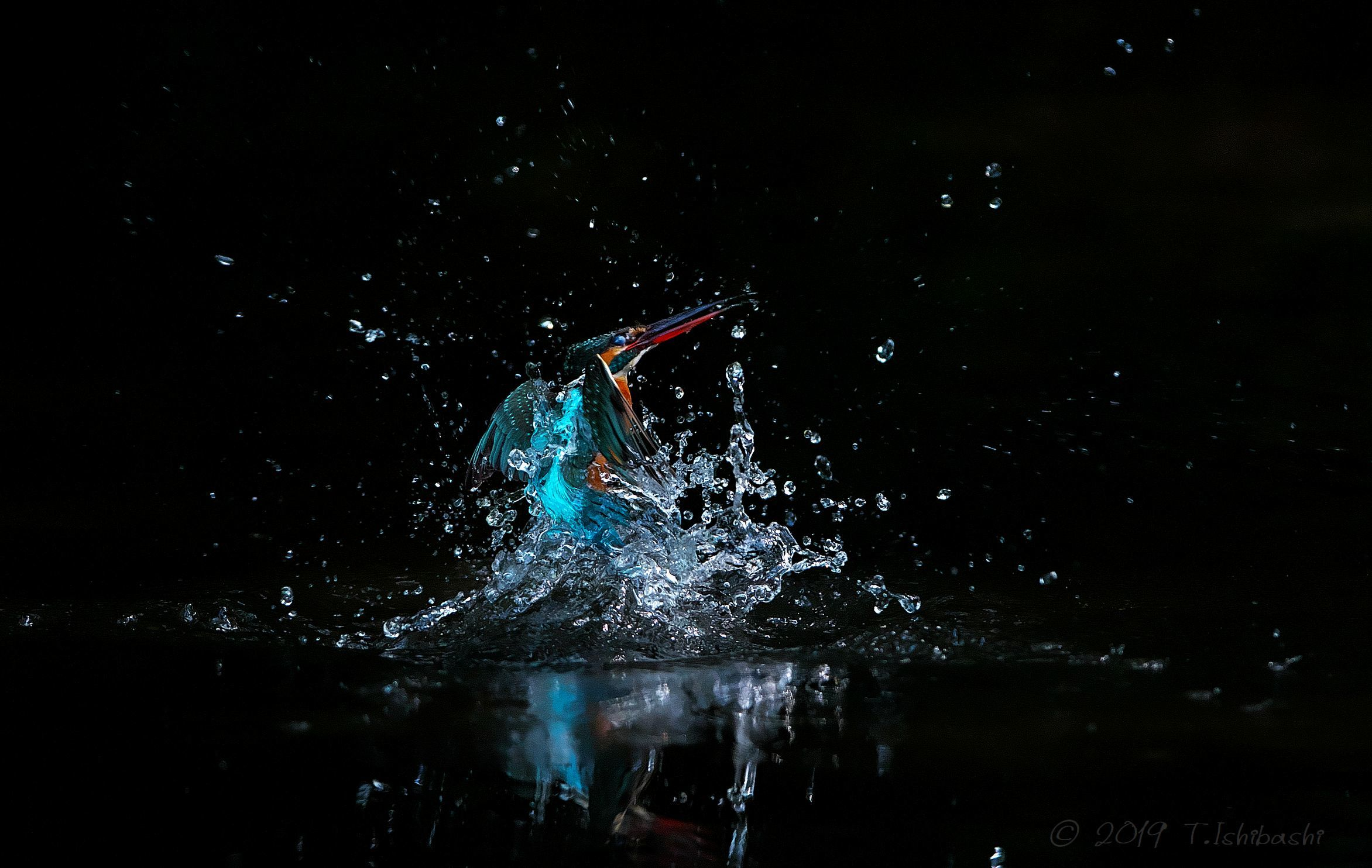 翡翠の水浴び_d0122046_08015415.jpg