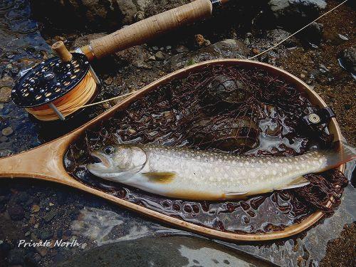 昨日の釣り_d0261148_11563201.jpg