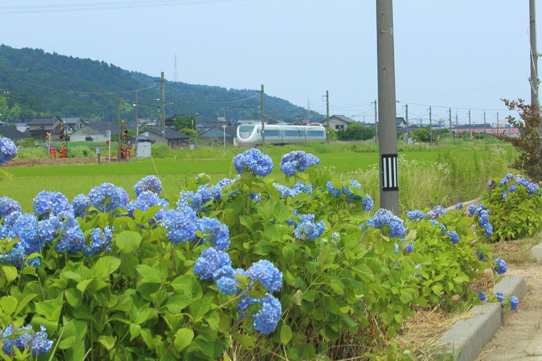 電車に花_e0403850_16113363.jpg