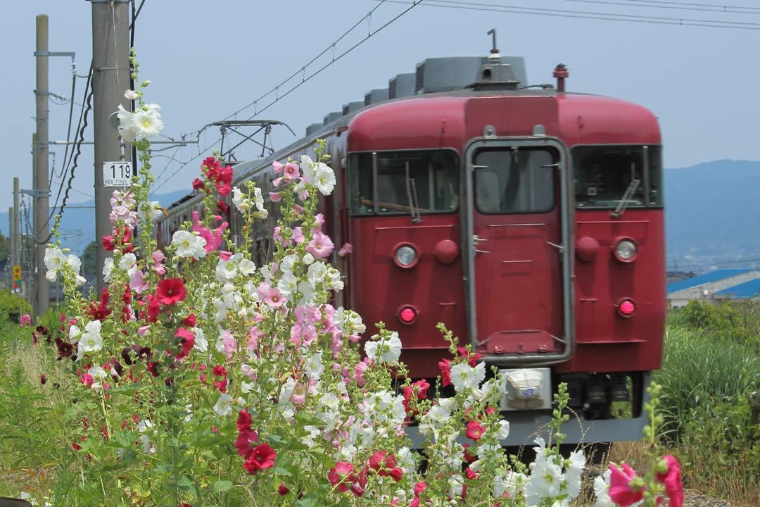 電車に花_e0403850_17352417.jpg
