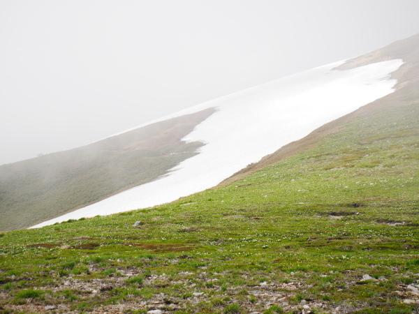 初夏の平標山から仙の倉へ_a0351368_23353298.jpg