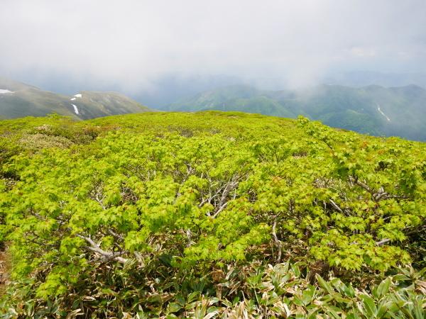 初夏の平標山から仙の倉へ_a0351368_23371590.jpg