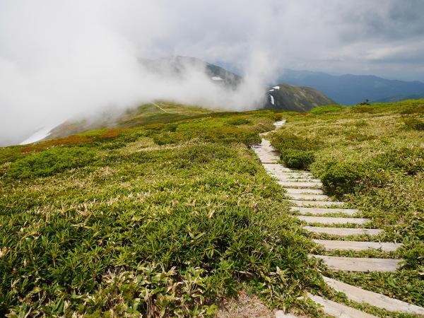初夏の平標山から仙の倉へ_a0351368_23372855.jpg