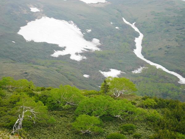 初夏の平標山から仙の倉へ_a0351368_23390750.jpg