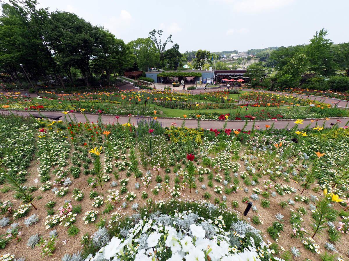花の文化園 ユリがいっぱい_d0283373_13015694.jpg