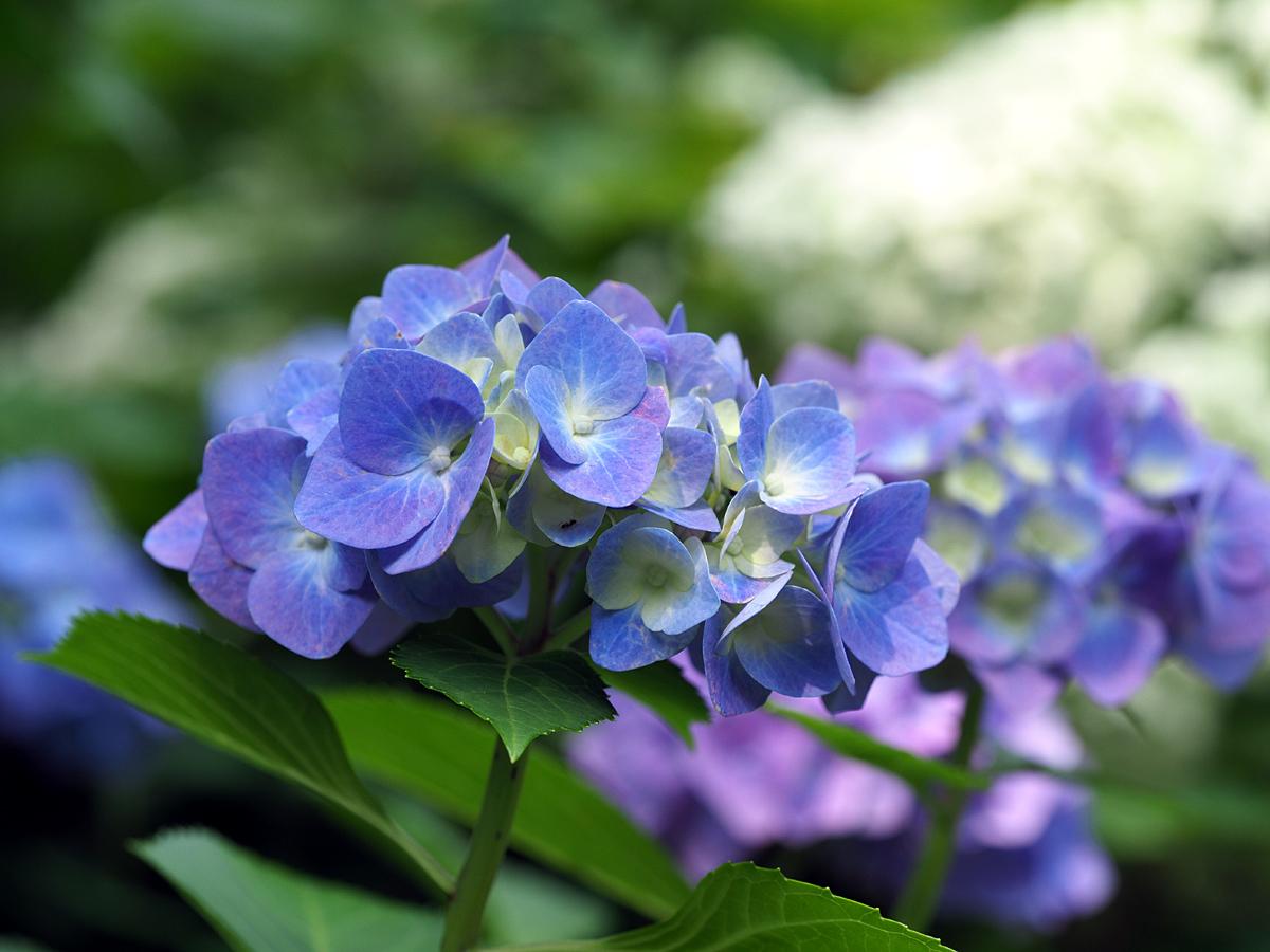 花の文化園 ユリがいっぱい_d0283373_13031691.jpg