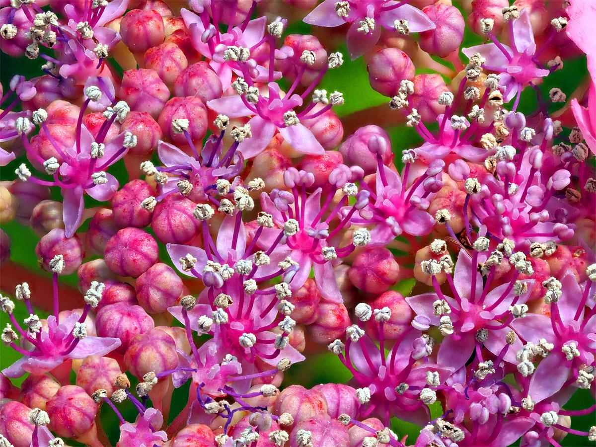 花の文化園 ユリがいっぱい_d0283373_13032335.jpg