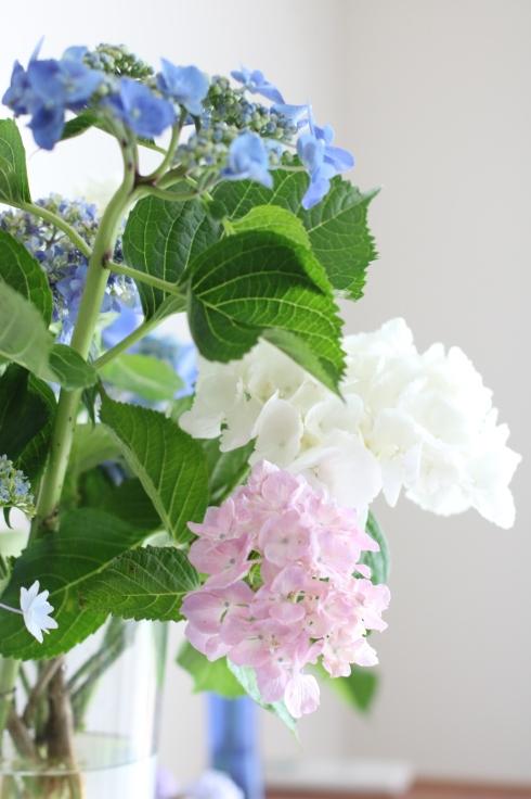 紫陽花のおもてなし_f0306287_12131212.jpg