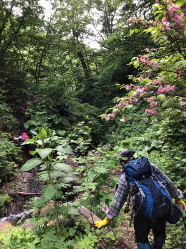 花の定山渓天狗岳、2019.6.18ー同行者からの写真ー_f0138096_21082501.jpg