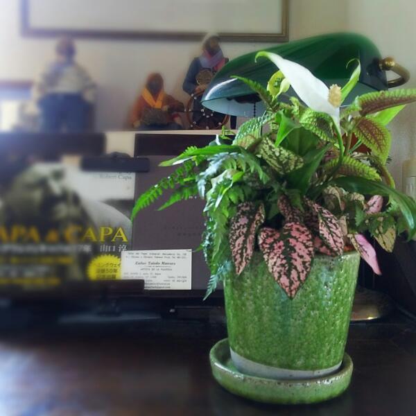 植物はいいですね(^^♪_f0116297_21160462.jpg