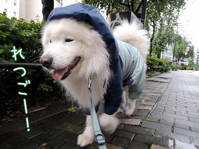 雨上がり_c0062832_14574148.jpg