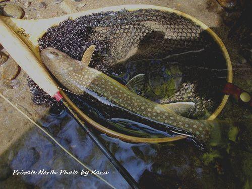 Kazuさんの釣り_d0261148_11423638.jpg