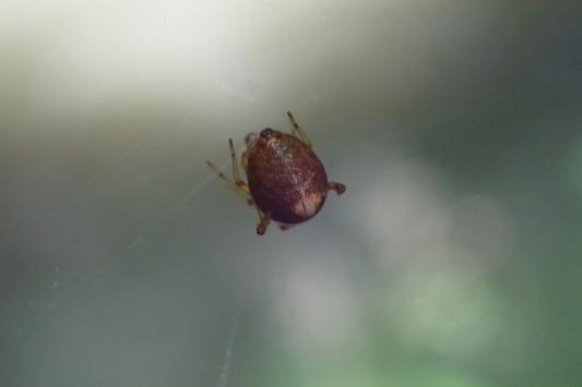 ベルダのクモたち No.2_f0131669_17151926.jpg