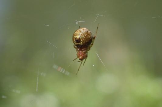 ベルダのクモたち No.2_f0131669_17231877.jpg