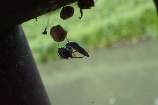 ベルダのクモたち No.2_f0131669_17240430.jpg