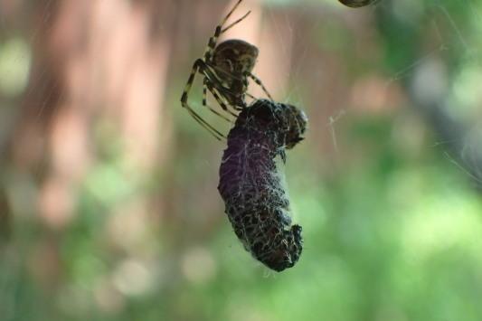ベルダのクモたち No.2_f0131669_17260182.jpg