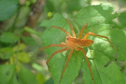 ベルダのクモたち No.2_f0131669_17283699.jpg
