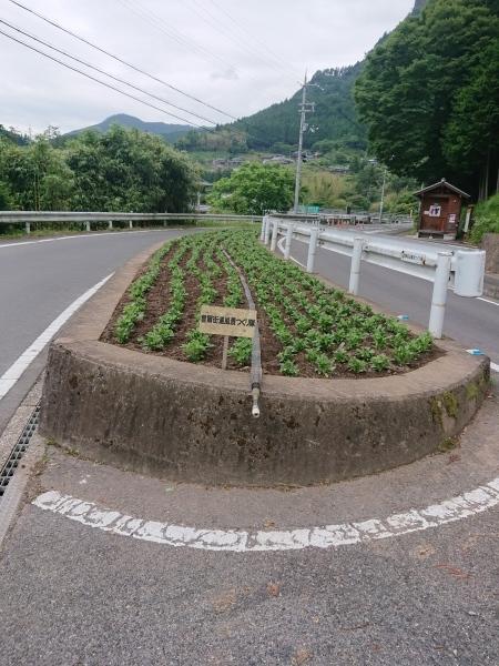 2019/6/22 花街道づくり_a0277170_11505059.jpg