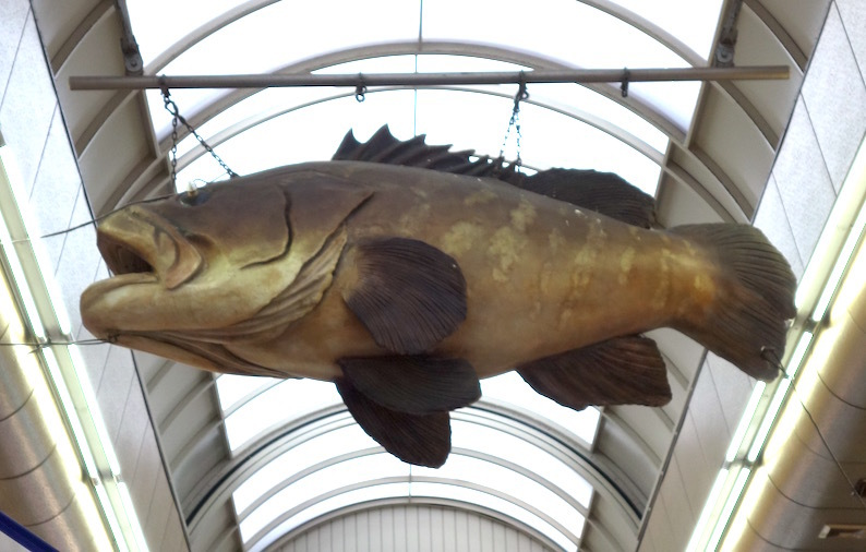 黒門市場の魚_b0057679_09080210.jpg