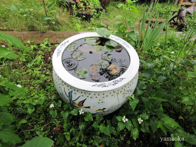 夏至の雨にたっぷり濡れて。_f0071480_22194046.jpg