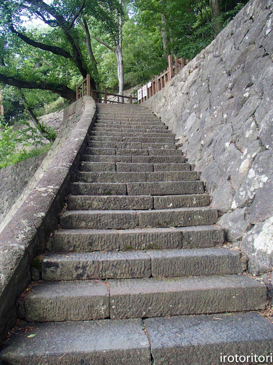 金沢旅日記 その3  (カワラヒワ)  2019/05/30_d0146592_23362248.jpg