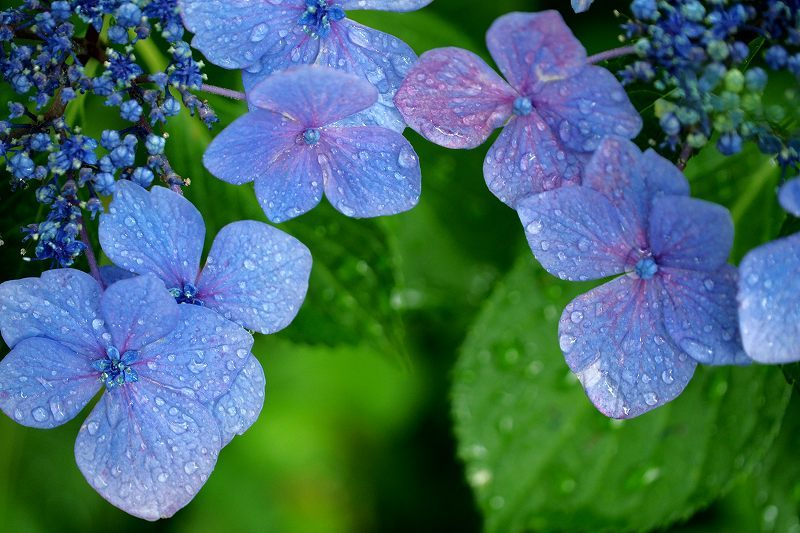 雨の中で_e0348392_18254529.jpg