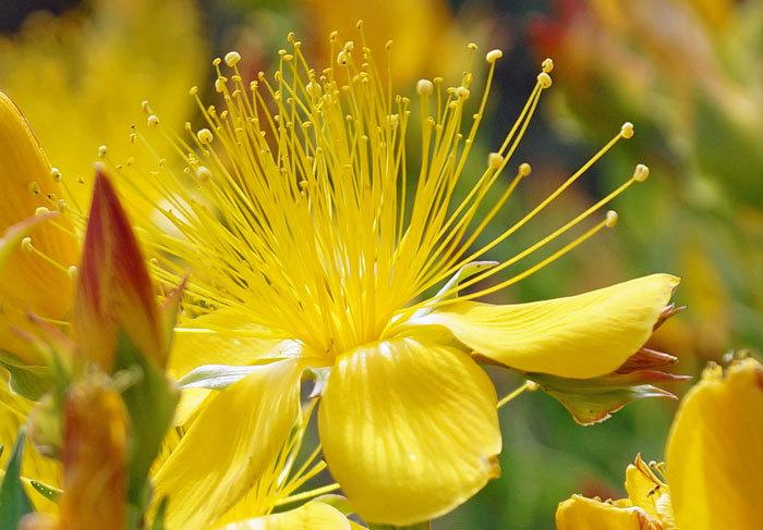 黄色い花_d0162994_15544070.jpg