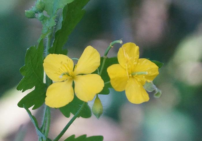 黄色い花_d0162994_15555019.jpg
