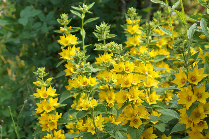 黄色い花_d0162994_15560275.jpg