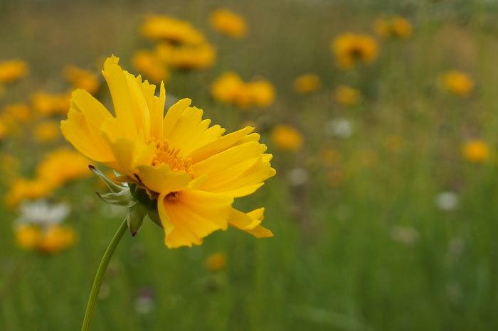 黄色い花_d0162994_15574256.jpg