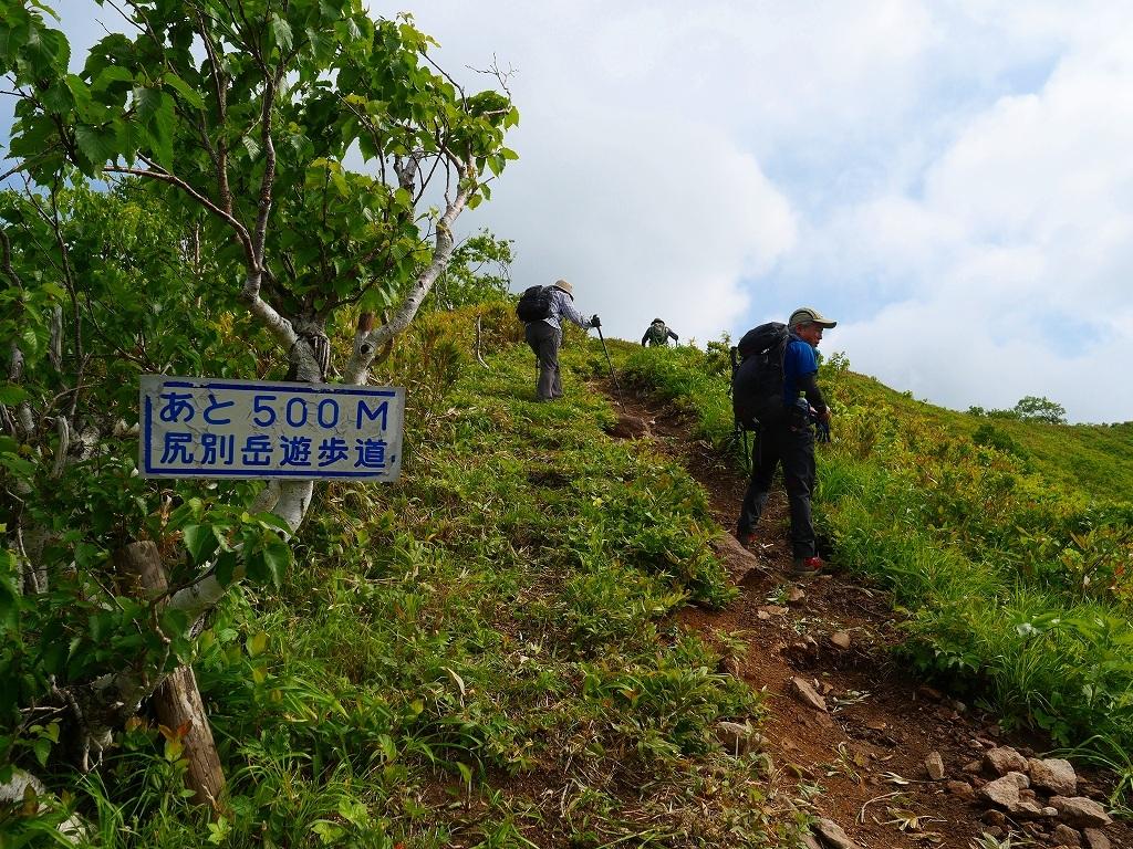尻別岳と橇負山に樽前山お花畑、2019.6.20_f0138096_16040859.jpg