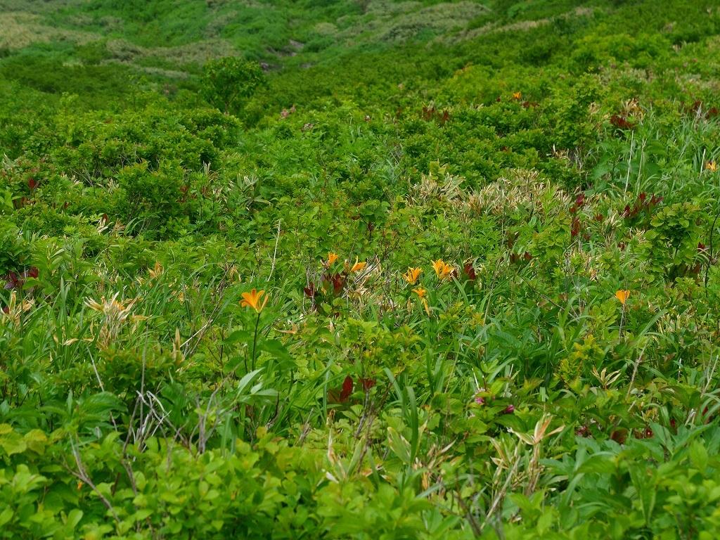 尻別岳と橇負山に樽前山お花畑、2019.6.20_f0138096_16045579.jpg