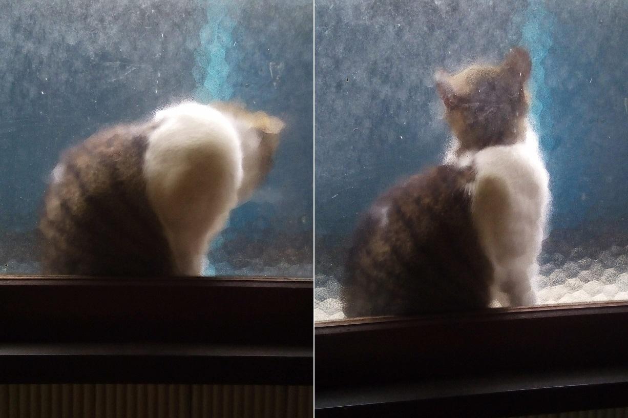 モザイク猫、久し振り_a0057402_22335922.jpg