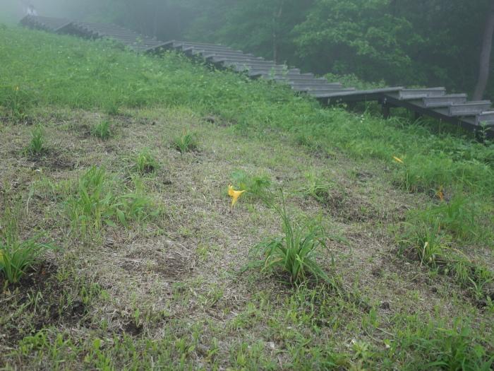 霧の霧降高原_e0276411_19453886.jpg