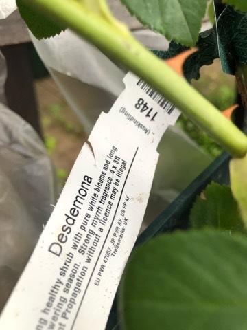 La cosecha de arándanos_e0365614_18145480.jpg