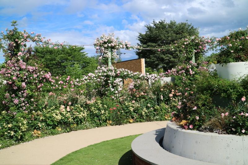 満開の中之条ガーデンズへ~♪_e0397815_01053679.jpg