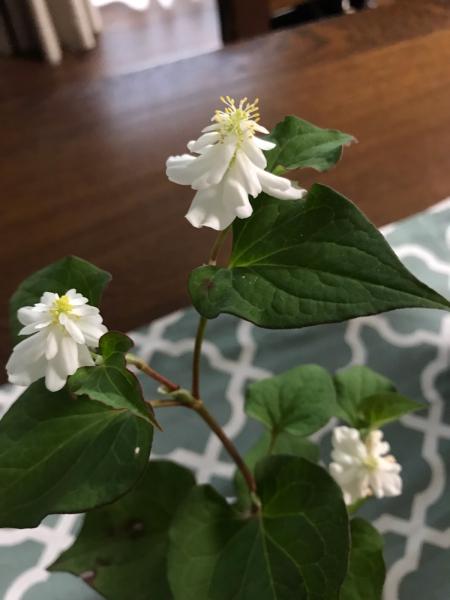 花のキロク。2._b0157216_18335223.jpg