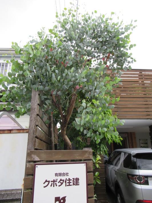 トキワヤマボウシの白い花☆_c0152341_07414787.jpg
